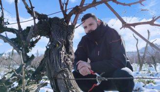 Šta se zimi radi u vinogradu?